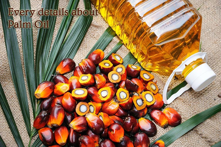 Every details about Palm Oil: